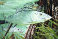 Jean Eastman Bonefish Blues Nautical Art Print