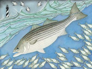 Kim Mosher Striped Bass Art Print Limited Edition