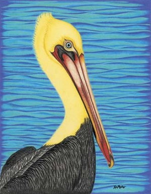 Kim Mosher Pelican Art Print Limited Edition