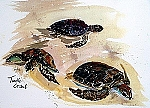 Ortrud Tyler Turtle Crawl 12x16 Watercolor Print