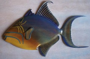 Papa Doc's Queen Triggerfish